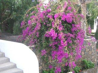 Haria - Habitacion violeta con bano al patio