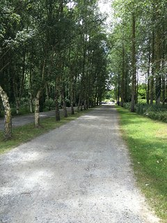 Tree lined driveway down to parking area