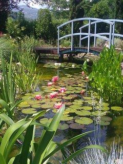 Nel giardino c'è un laghetto, anche questo è a vostra disposizione
