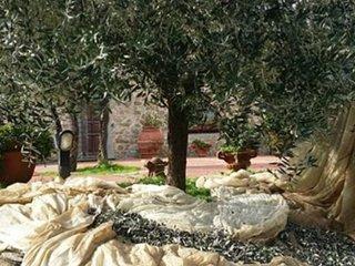 Villa colonica con depandance, Quarrata