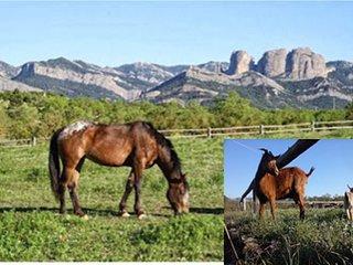 Casa Cavalls Quarts, Horta de Sant Joan