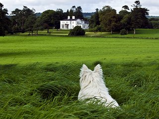 Luxury Manor 68 Acre Private Estate 7 Bedrooms 8 Bathrooms Day tours/Views/sea, Killarney