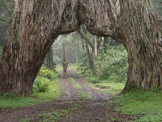 Redwood Expeditions, Arusha National Park