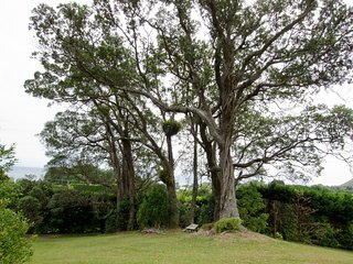 Large grounds with ancient native trees.
