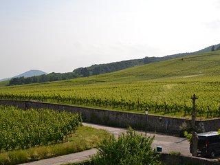 Au coeur du vignoble alsacien à Dambach-la-Ville, Selestat