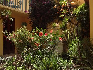 Courtyard garden with Hibiscus