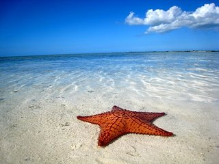 LUXURY RENTALS~ Starfish Beach House