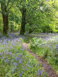 Lanhydrock Woods (under ten miles away)