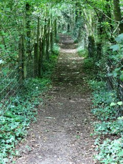 One of the many paths in the Wye Valley