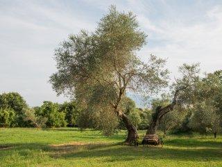 Podere Villa Castelletto