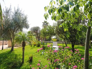 ARIA DI SICILIA: agrumi, fichi d'india, carrubi, Noto