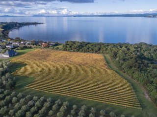 Boutique vineyard on Great Lake Taupo, Omori