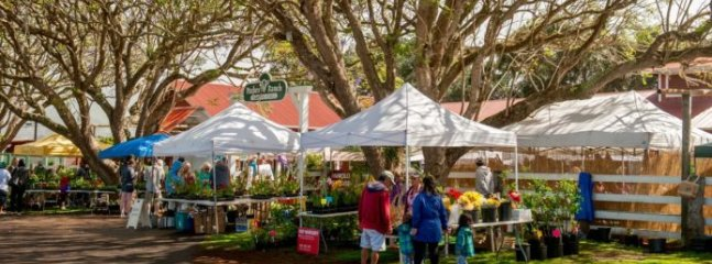 Kamuela Farmers Market on Saturdays in Waimea at Pukalani Stables
