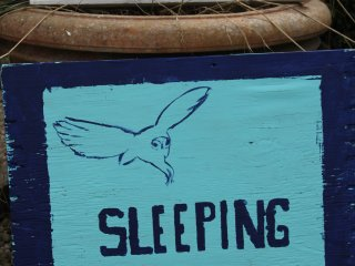 "oksdonk ""sleeping with owls"", Kapelle-op-den-Bos"