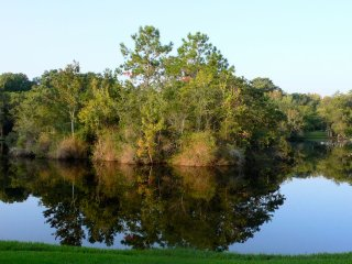 Ground Floor Apartment Overlooking Pond, Palm Harbor