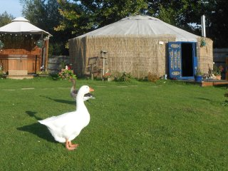 Lakeland Yurts private HOT TUB and Fishing  ESSEX, Hatfield Peverel