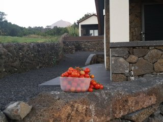 Vila Paim - Top House - Cottage in Pico - Great Views