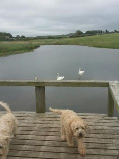 The boat house, swans, fishing lake and dogs close to the cottage.
