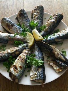 Mackerel fresh from the bay!