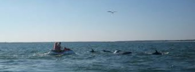 Jetskiing and Dolphin Watching- Two Favorite Myrtle Beach Pastimes!