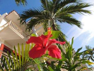 A306 Reef, Paseo del Sol, Penthouse, Playa del Carmen