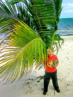 beach with some palm tree