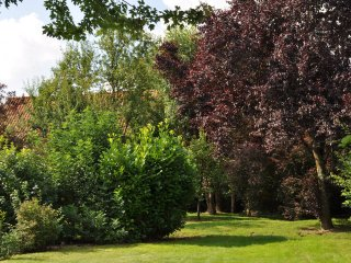 In the large back garden, there are fruit trees, shrubs, table and chairs, sun loungers and barbeque