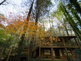 A variety of trees surround the cabin for privacy, seclusion, and natural beauty.