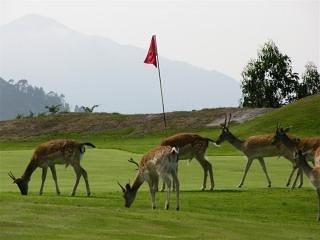 Campo de golf de la Rasa de Berbes.