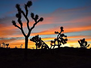 Oleander Retreat, Joshua Tree