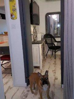 Nos amis les chiens sont les bien venus sous conditions
