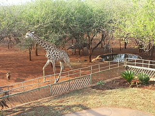Nyamazane Lodge, Marloth Park