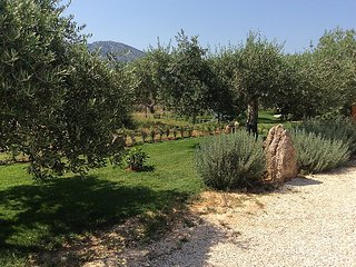Appart. all'interno di un Oliveto