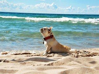 PET FRIENDLY & OCEAN VIEW, private rooftop & pool, Playa del Carmen