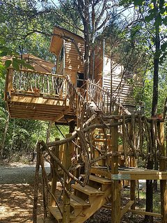 South view of the Creek treehouse