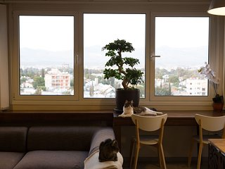 Bonsai tree in front of the massive living room window, with one of the best views in Nicosia.