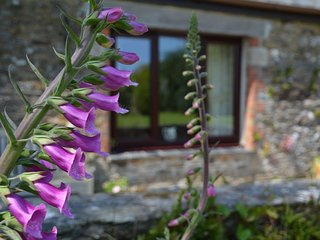 43126 Cottage in Looe, St Martin