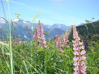3 pièces au pied des pistes, L'Alpe d'Huez
