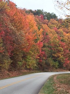 Fall color in the Blue Ridge Mountains, 4 miles from the cabin.