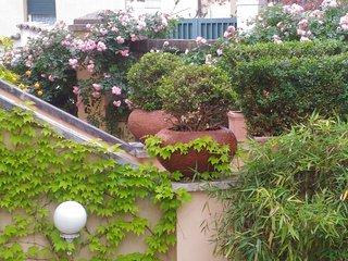 The Wisteria Terrace of Rome B&B