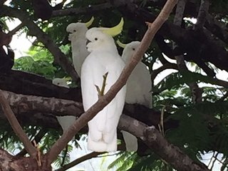 TWO COCKATOOS GARDEN ACCOMMODATION, Bilambil Heights