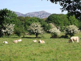 42969 Cottage in Pwllheli, Llwyndyrys