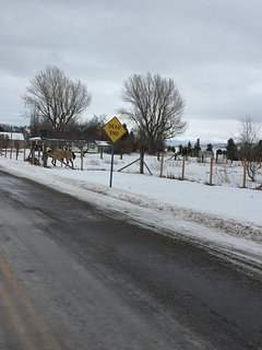 This is a shot of our corral with some winter guests!