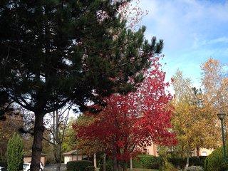 Logement Pour étudiants ou Salariés avec vue sur Jardins, Tournefeuille