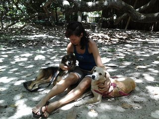 Nature Retreat with Healing Dogs in Brazil - Suite Curió