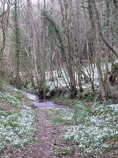 Snowdrop Valley with it's natural carpet of exquisite native flowers to welcome spring.