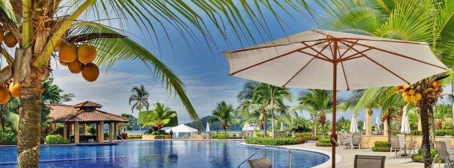 Palm Tree,Tree,Hotel,Resort,Tropical