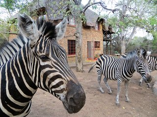 Rafiki's Resthouse  : Private safari on your doorstep