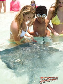 Come touch & feed the fabulous stingrays!