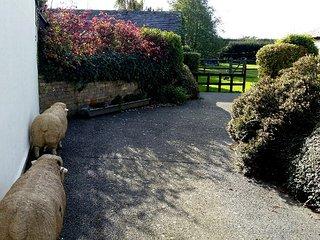 Rowan Cottage, Hawthorn Farm, Kent, Ash